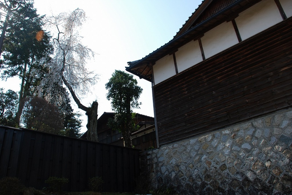 Kotokuji Temple and cherry blossoms